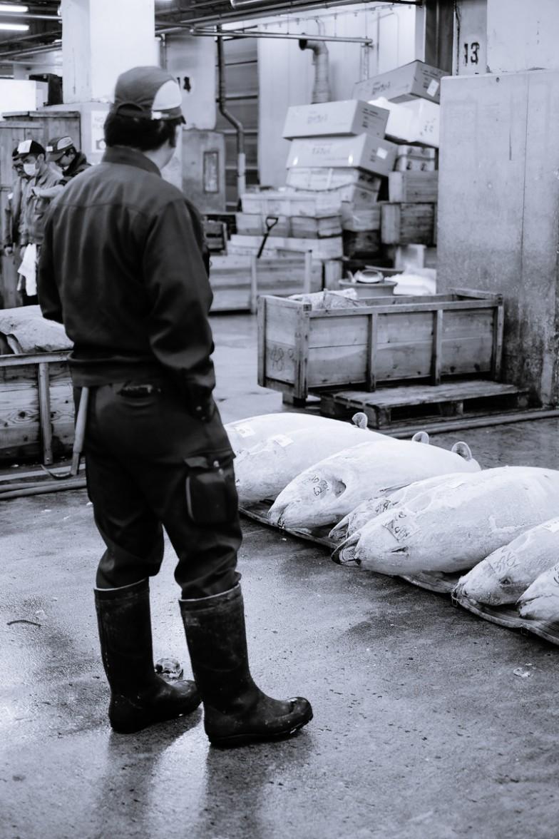 Tokyo_Fishmarket (1 von 16)