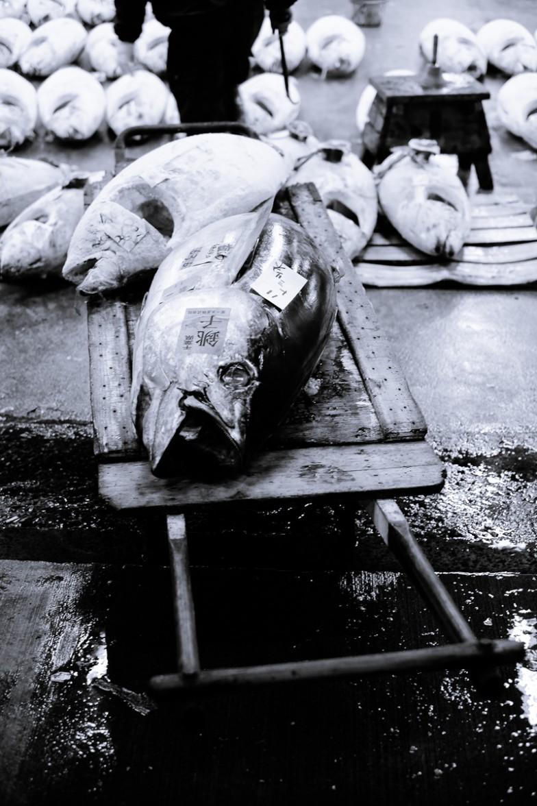 Tokyo_Fishmarket (13 von 16)