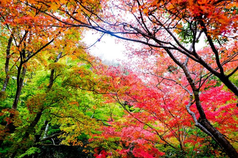 Kyoto-6