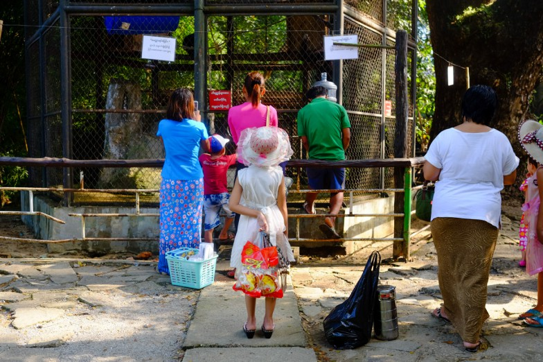Yangon_Zoo-3