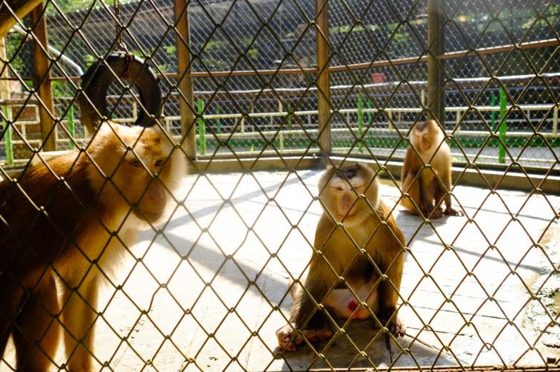 Yangon_Zoo-4