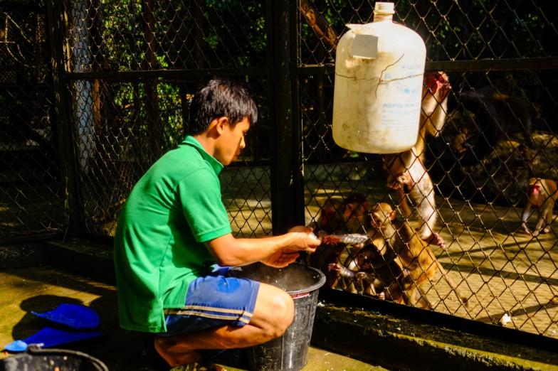 Yangon_Zoo-6
